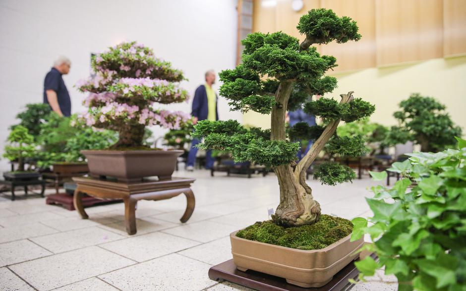 Bonsai exhibition in Leipzig | Autor: Jan Woitas/DPA/PIXSELL