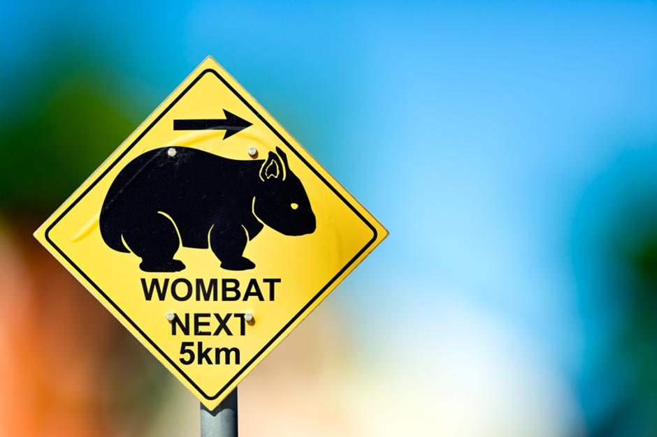 Traffic sign at the road side warns the drivers about wombat cro | Autor: Ferenc Cegledi