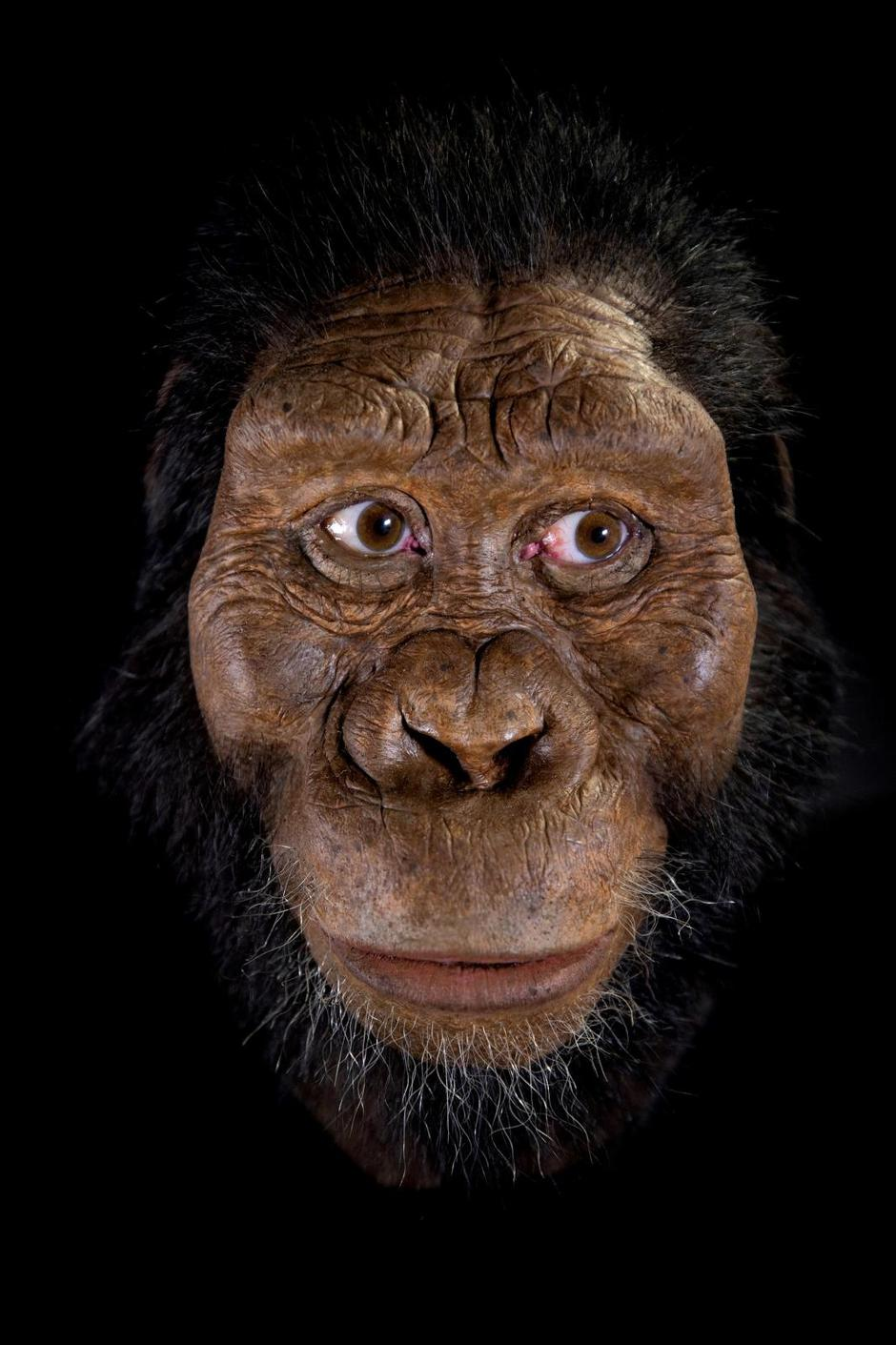 Handout photo of a facial reconstruction by John Gurche of the species Australopithecus anamensis, based on a nearly complete cranium fossil discovered in 2016 in Ethiopia | Autor: Handout/REUTERS/PIXSELL/REUTERS/PIXSELL