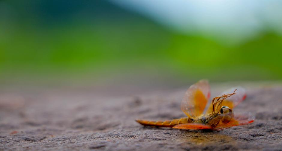 Dragonfly lying dead on the stone floor. | Autor: Jukkrapun Thipsupa