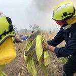 Fire and Rescue NSW team give water to a koala as they rescue it from fire in Jacky Bulbin Flat