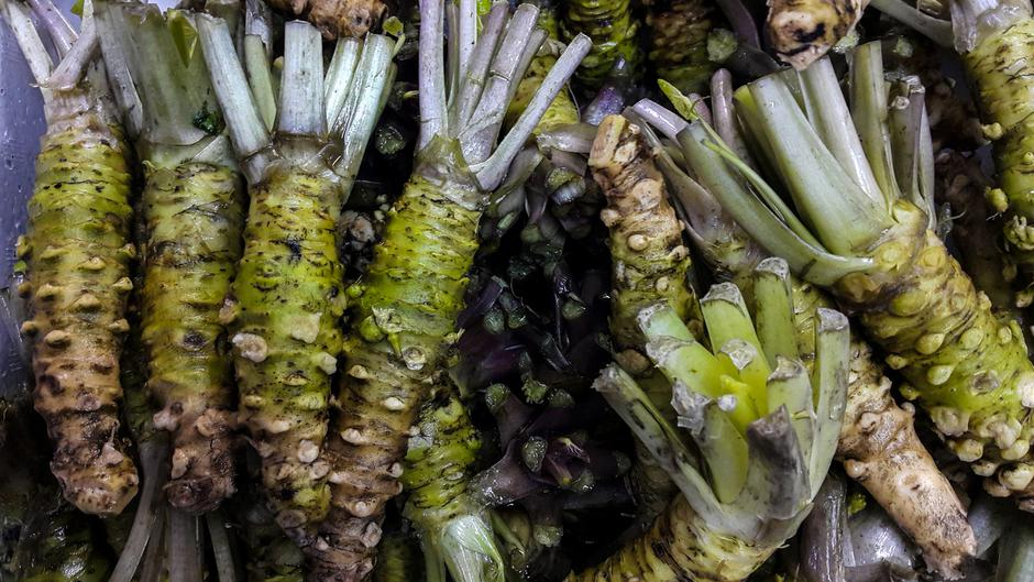 Fresh wasabi sold in the Japanese market | Autor: behindlens