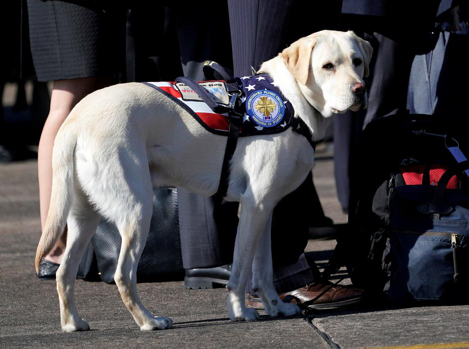 Bush's dog Sully is seen during a departure ceremony at Ellington Field in Houston | Autor: POOL