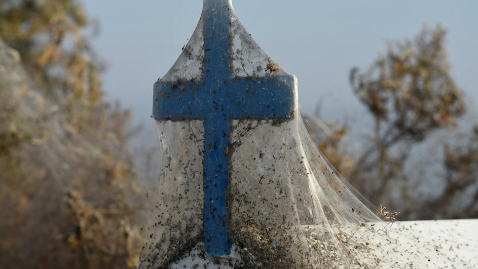 Spider webs cover a roadside shrine at the banks of Lake Vistonida