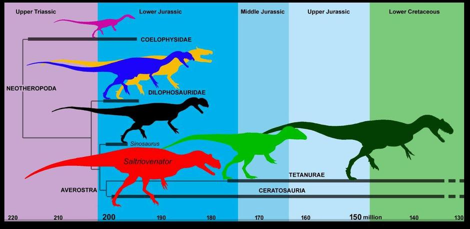 A simplified evolutionary tree of predatory dinosaurs (theropods) showing the time span in which Saltriovenator existed is pictured in this handout illustration | Autor: HANDOUT