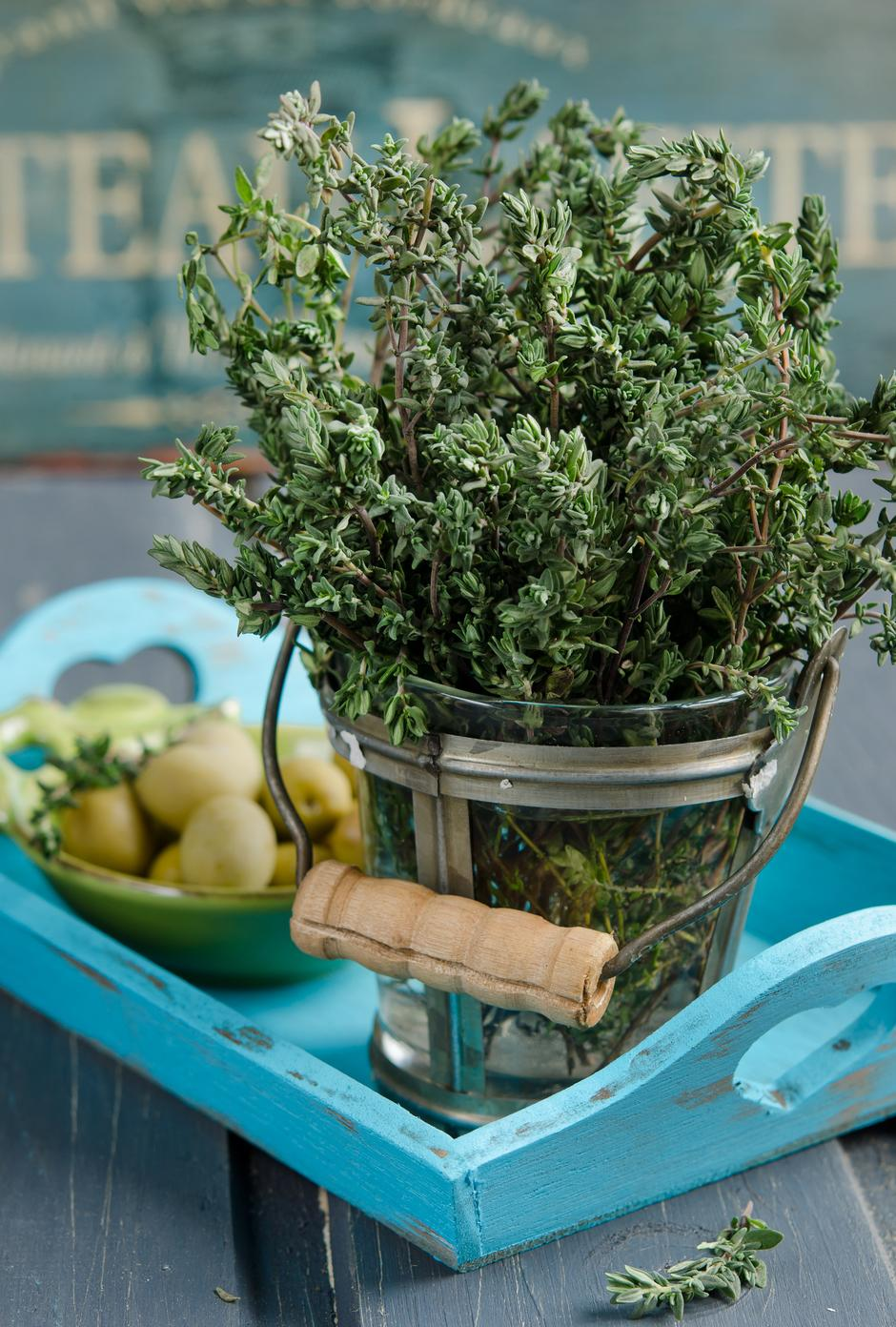 Thyme herb plant in a vase | Autor: Fotolia