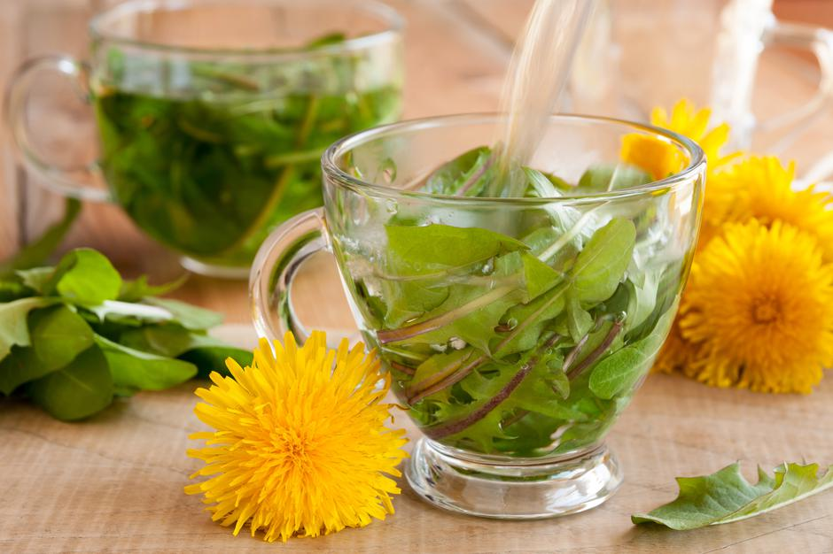 Preparing dandelion tea by pouring hot water over fresh dandelio | Autor: Madeleine Steinbach