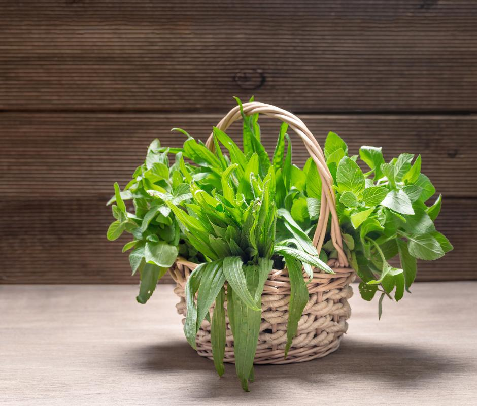 Bunches of herbs in the basket. Mint and plantain. | Autor: Dreamstime