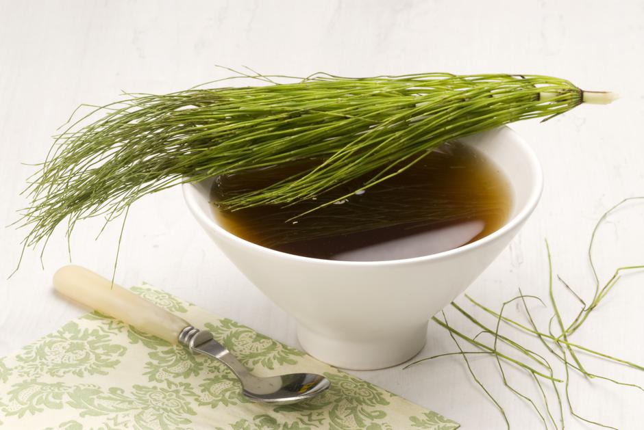 Herbal tea. Horsetail. | Autor: Dreamstime