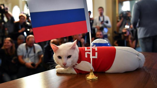 Cat Achilles attempts to predict the result of the opening match of the 2018 FIFA World Cup between Russia and Saudi Arabia in Saint Petersburg