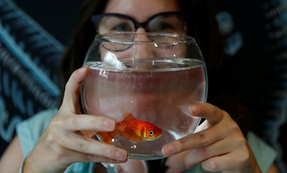 "Emie Le Fouest from Paris brings her goldfish named ""Luiz Pablo"" to Paris aquarium as part of an operation launched to take care of hundreds of goldfish abandoned by French holiday-makers, in Paris 