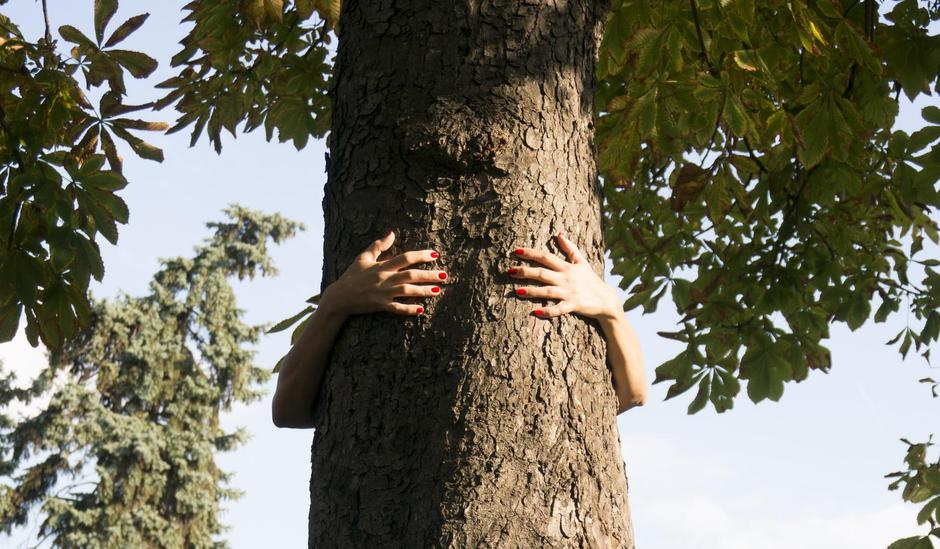 hands hugging a tree | Autor: Fotolia