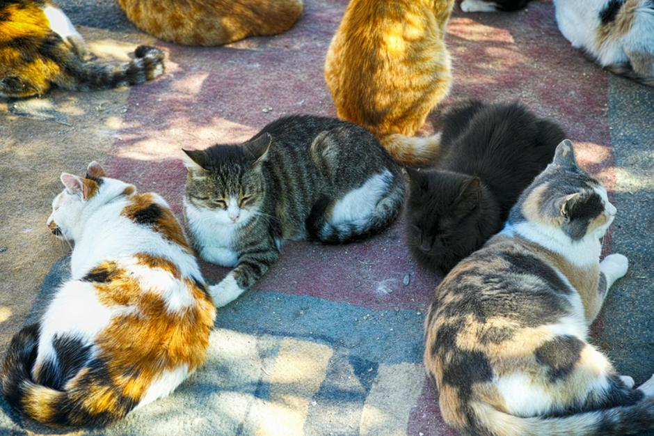 A lots of cats are relaxing.  | Autor: Dreamstime
