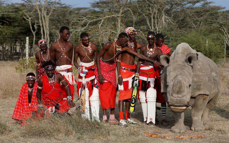 FILE PHOTO: Members of the Maasai Cricket Warriors pose for a photograph with the last surviving male northern white rhino in Laikipia | Autor: THOMAS MUKOYA/REUTERS/PIXSELL/REUTERS/PIXSELL